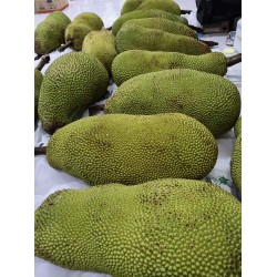 JF10  Jackfruit -10kg