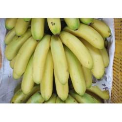 Banana 15: Organic Pisang Beranang 有机香蕉